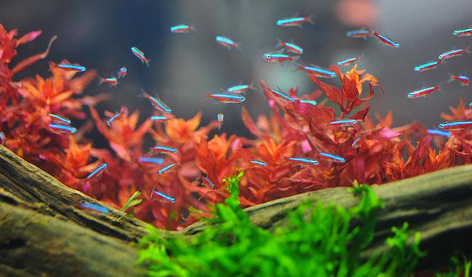 poisson neon