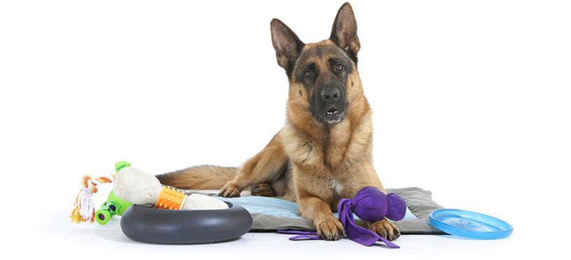accessoire canin