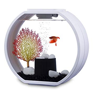 aquarium deco