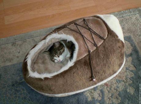 chausson pour chat