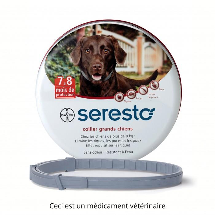 collier anti tique pour chien