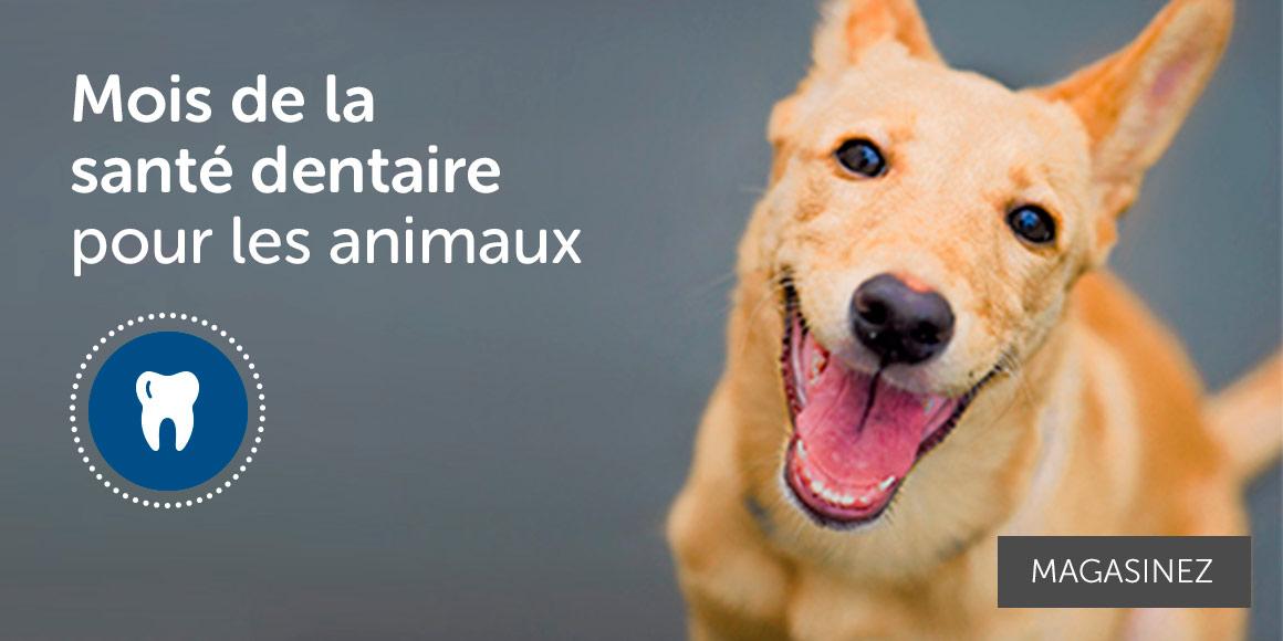 magasin pour chien en ligne