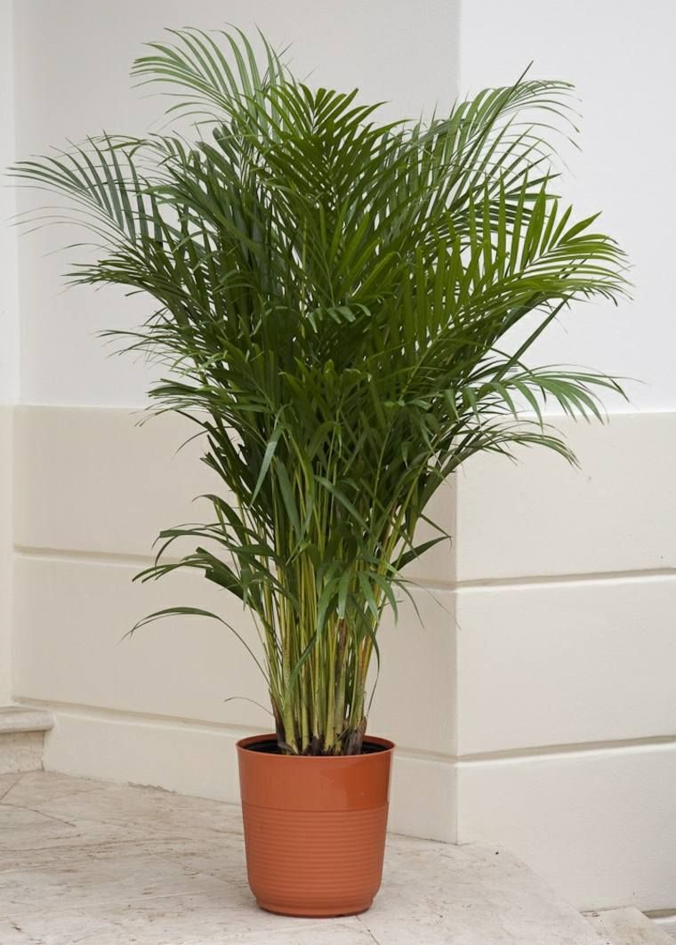plante dépolluante