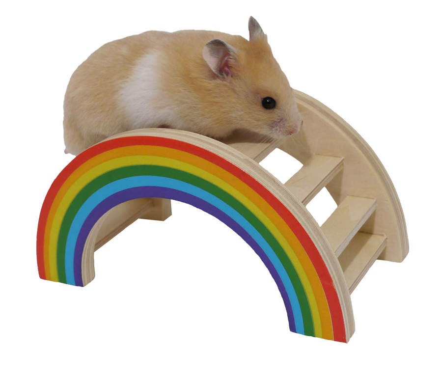pont pour hamster