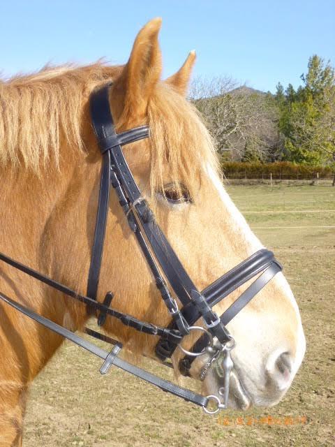 bride cheval